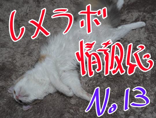 レメラボ情報誌NO13